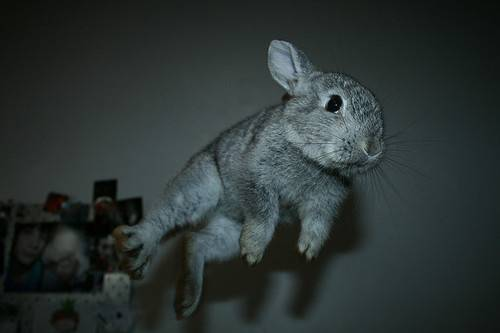 cute-gray-jump-rabbit-white-Favim.com-98202